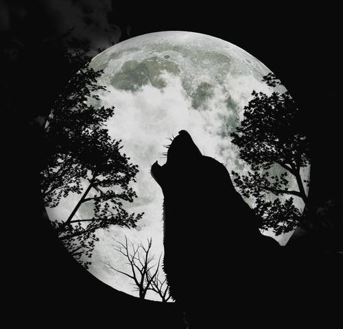 The Newborn Wolf